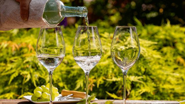 Degustação de Vinho Verde